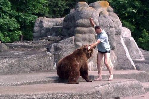 В Польше разыскивается мужчина, напавший на медведя в зоопарке