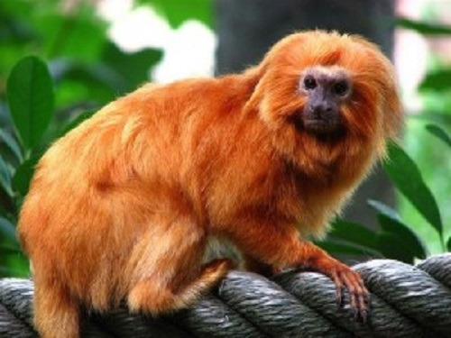 Из французского зоопарка похитили 17 редких обезьян
