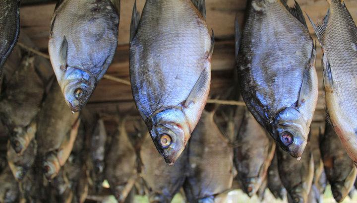 В Татарстане полицейского будут судить за взятки, которые рыбой