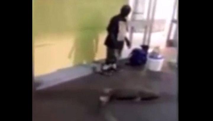 Мужчина попытался продать в супермаркет живую акулу