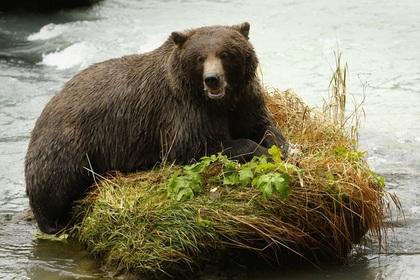 На Камчатке решили выпустить комикс о правилах поведения с медведями