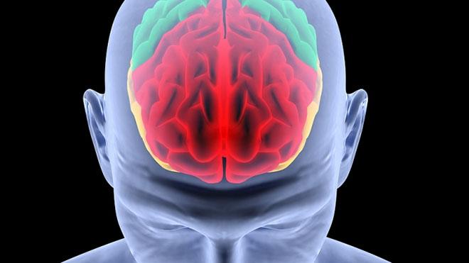 Стало известно, от чего зависит объем головного мозга