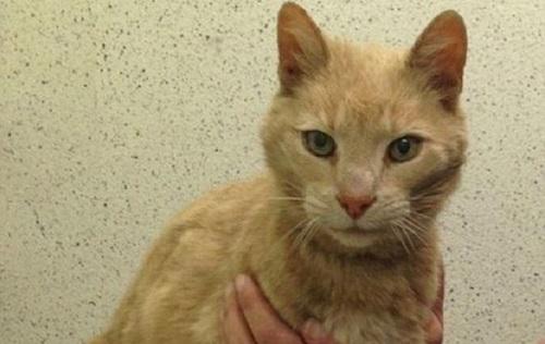 В Ирландии был найден пропавший в Австралии кот