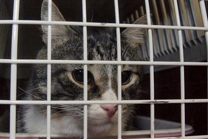Житель Британии перевозил героин в кошачьих клетках