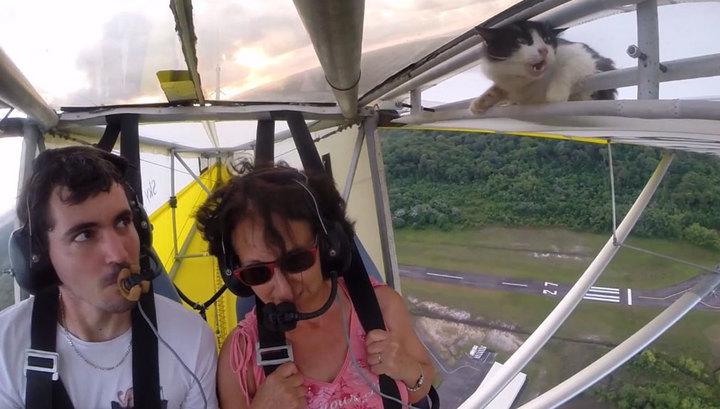 Кот-воздухоплаватель стал звездой в Сети