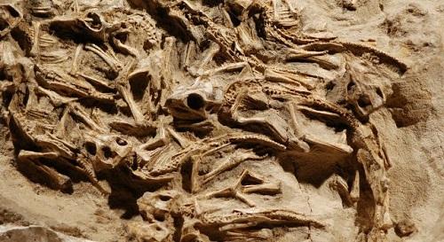 Обнаружены останки зубов динозавра возрастом около 81 млн лет