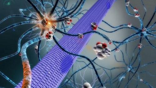 Изобретен уникальный имплантат для доставки медикаментов в мозг человека