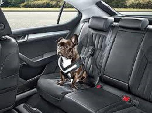 Skoda создала ремни безопасности для собак