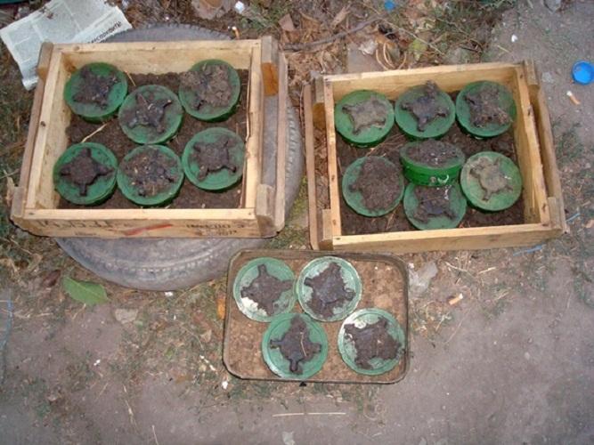 В Донецкой области саперы успешно обезвредили минное поле