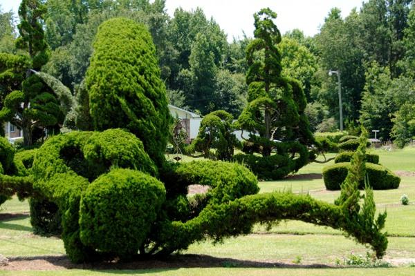 33 кустарника удивительной формы