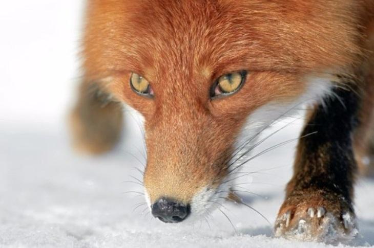 Самые красивые снимки дикой природы: 20 фото