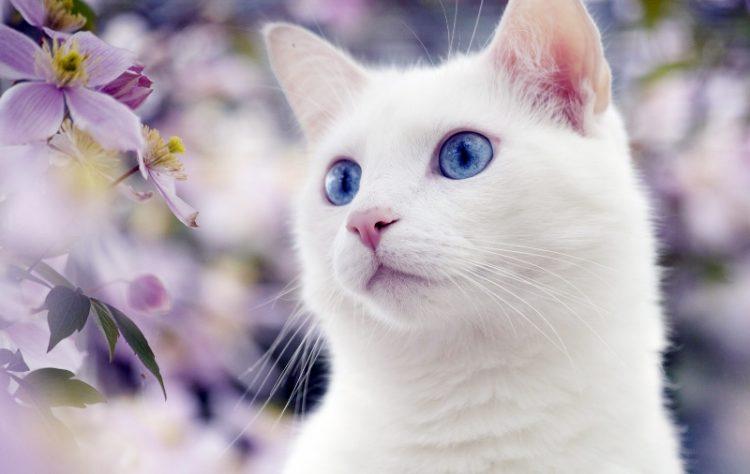 50 лучших фотографий кошек за всю историю человечества