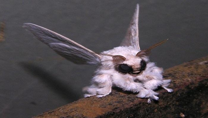 Самые странные животные в мире, 27 фото