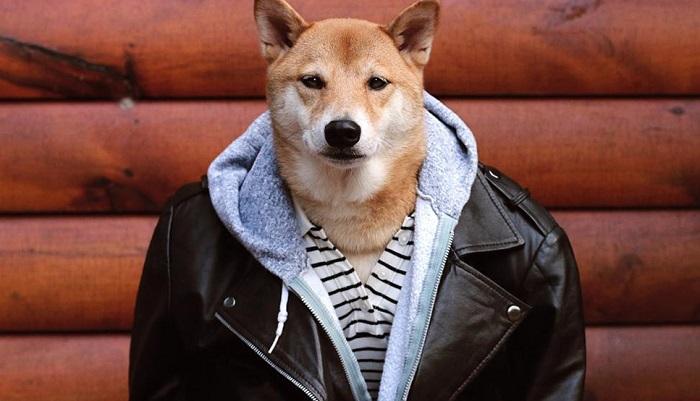 Собаки Шиба-ину: 20 причин полюбить эту породу