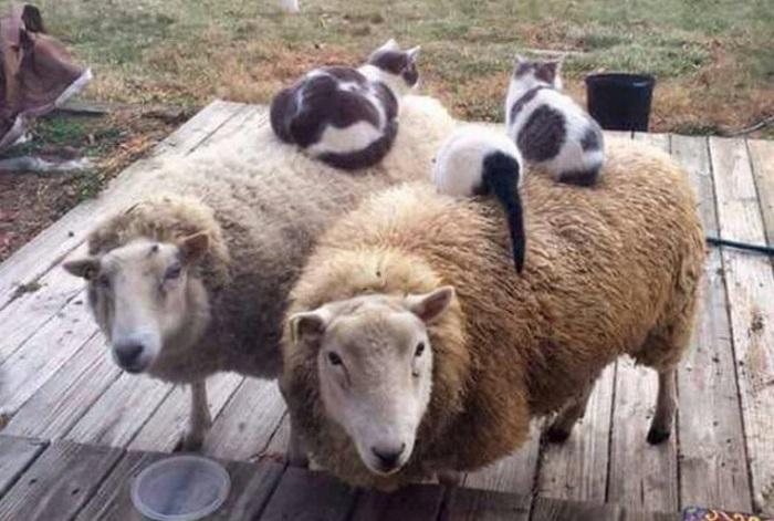 Коты - это весело: 100 самых смешных фото с просторов интернета