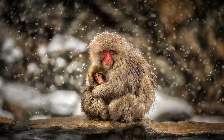Материнство в мире животных: 40 самых милых фото