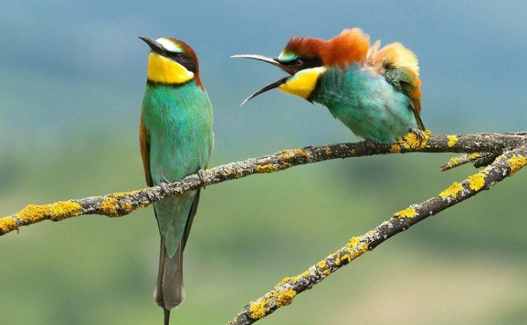 40 самых впечатляющих фотографий дикой природы