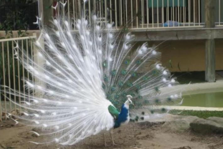Животные, которых природа наделила необычным окрасом