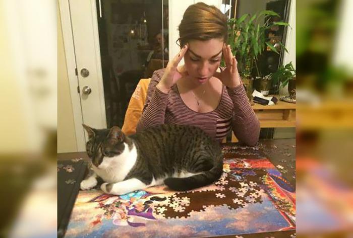 35 уморительных кошек, которые сделают ваш день лучше