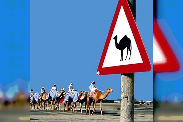 30 очень странных и смешных дорожных знаков, указателей и табличек